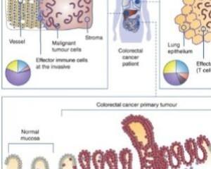 British Journal of Cancervolume 120, pages871–882 (2019)