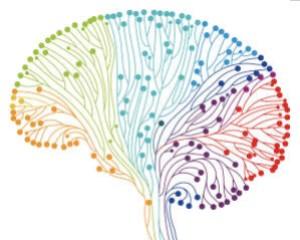 Frontiers in Behavioral Neuroscience, 2017, 11(154).