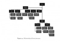 Relationship of Honor Processes