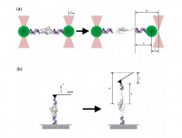 Schematic illustration of single-molecule experiments