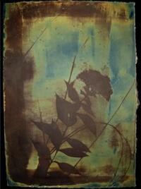 Untitled, from Backyard Botanicals