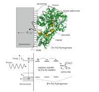 Hybrid photoelectrodes